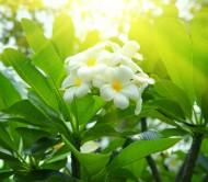 Jaśmin kwitnie od lutego do kwietnia; drobne, żółte kwiaty z długa rurka; wymaga okrycia na zimę.